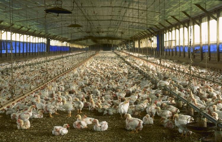 How To Set Up A Poultry Farm? Image