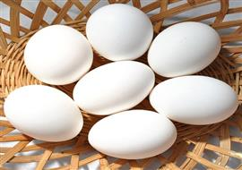 Open Egg Market (Monthly Rate Sheet) Image